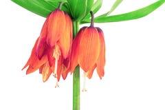 Corona de las flores Fotografía de archivo libre de regalías