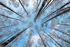 Corona de los árboles Foto de archivo libre de regalías