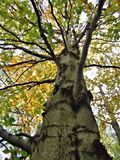 Corona de reducción en el otoño Imagen de archivo libre de regalías