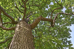 Corona degli alberi Fotografie Stock