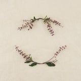 Corona dei fiori del basilico Fotografia Stock Libera da Diritti