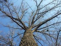 Corona del árbol Foto de archivo libre de regalías