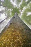 Corona del árbol Fotografía de archivo libre de regalías