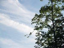 Corona del árbol de la primavera Imágenes de archivo libres de regalías