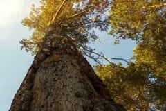 Corona del árbol en los rayos del sol poniente Imagen de archivo