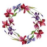 Corona del fiore dell'iride del Wildflower in uno stile dell'acquerello Immagine Stock Libera da Diritti