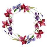 Corona del fiore dell'iride del Wildflower in uno stile dell'acquerello Fotografia Stock