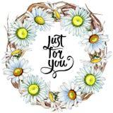 Corona del fiore della camomilla del Wildflower in uno stile dell'acquerello Fotografia Stock