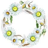 Corona del fiore della camomilla del Wildflower in uno stile dell'acquerello Fotografie Stock
