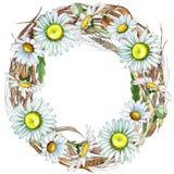 Corona del fiore della camomilla del Wildflower in uno stile dell'acquerello Immagini Stock