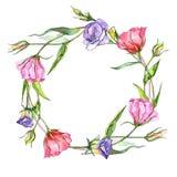 Corona del fiore di eustoma del Wildflower in uno stile dell'acquerello Fotografia Stock Libera da Diritti