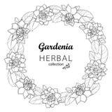 Corona del fiore di gardenia del profilo di vettore con fogliame decorato nel nero isolato su fondo bianco Fiore fragrante tropic illustrazione di stock