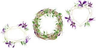 Corona del fiore di hanajima della clematide del Wildflower in uno stile dell'acquerello Fotografia Stock Libera da Diritti