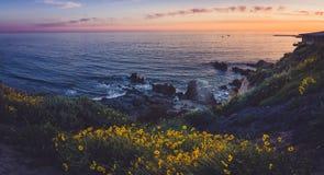 Corona Del Mar Super Bloom Arkivfoton