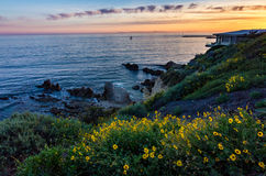 Corona Del Mar Super Bloom arkivfoton