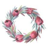 Corona del protea dell'acquerello Fotografia Stock Libera da Diritti