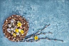 Corona del salice di Pasqua, del narciso ed uova di Pasqua della quaglia su fondo blu Copi lo spazio Fotografia Stock
