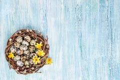 Corona del salice di Pasqua, narciso ed uova di Pasqua della quaglia su fondo blu Copi lo spazio Fotografia Stock Libera da Diritti