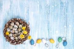 Corona del salice di Pasqua, del narciso ed uova di Pasqua variopinte su fondo blu Copi lo spazio Immagini Stock