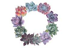 Corona dell'acquerello dei succulenti illustrazione vettoriale