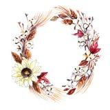 Corona dell'acquerello fatta delle capsule della pianta di cotone royalty illustrazione gratis