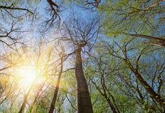 Immagini stock: foresta degli alberi a foglie caduche