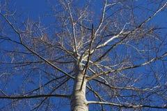 Corona dell'albero Immagini Stock