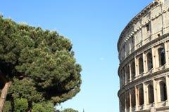 Corona dell'albero da Colosseum Immagine Stock