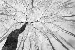 Corona dell'albero della primavera Immagini Stock Libere da Diritti