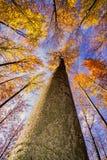 Corona dell'albero di autunno Fotografia Stock