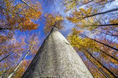 Corona dell'albero di autunno Fotografia Stock Libera da Diritti