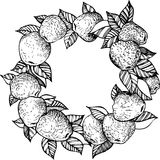 Corona della mela del disegno dell'inchiostro Fotografia Stock Libera da Diritti