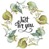 Corona delle foglie del tiglio in uno stile dell'acquerello Fotografie Stock Libere da Diritti