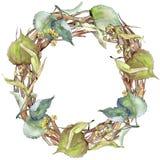 Corona delle foglie del tiglio in uno stile dell'acquerello Fotografie Stock