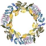 Corona delle foglie dell'acacia in uno stile dell'acquerello Immagini Stock