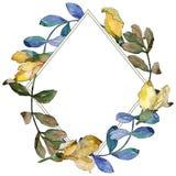 Corona delle foglie dell'acacia in uno stile dell'acquerello Fotografia Stock