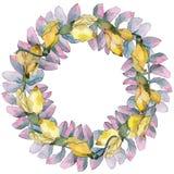 Corona delle foglie dell'acacia in uno stile dell'acquerello Immagine Stock