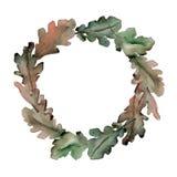 Corona delle foglie della quercia in uno stile dell'acquerello Fotografia Stock Libera da Diritti