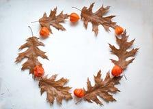 Corona di autunno fatta delle foglie di acero di autunno e dei fiori del physalis Disposizione piana, vista superiore, spazio del fotografie stock