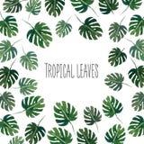 Corona di estate dei tropici dell'acquerello Immagine Stock