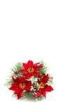 Corona di natale, fiori del poinsettia Immagini Stock Libere da Diritti