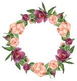 Corona dipinta a mano dei succulenti dell'acquerello Immagine Stock