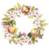 Corona disegnata a mano dell'acquerello dei fiori delle mele e dell'illustrazione delle foglie Illustrazione botanica dell'acquer Immagine Stock Libera da Diritti