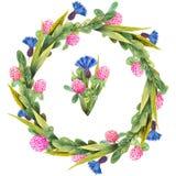 Corona disegnata a mano dell'acquerello fatta dei wildflowers del prato: fiordalisi blu, erbe di campo selvagge isolate su bianco royalty illustrazione gratis