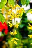 Corona dorata Fotografia Stock
