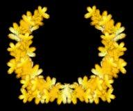 Corona dorata di Natale dei rami del pino Fotografia Stock