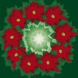 Corona floreale del poinsettia Fotografie Stock Libere da Diritti