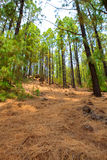 Corona Forestal in Teide National Park at Tenerife Stock Photo