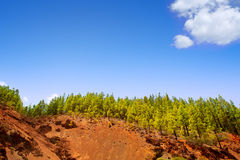 Corona Forestal in Teide National Park at Tenerife Royalty Free Stock Photo