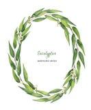 Corona ovale di vettore dell'acquerello con le foglie ed i rami dell'eucalyptus royalty illustrazione gratis